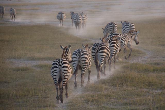 Africa Journal (II) – Amboseli